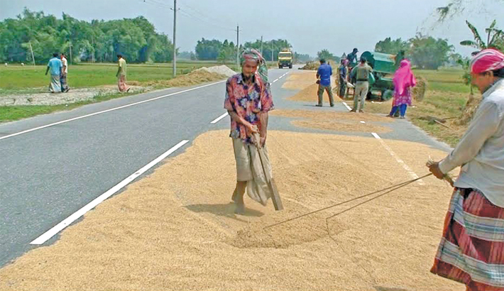 Local people are seen busy drying paddy