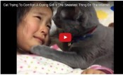 Sympathetic cat consoling young girl is melting hearts (Video)