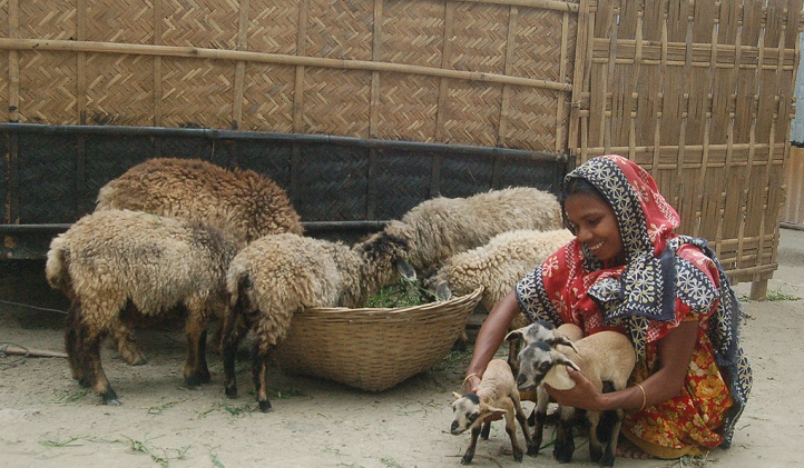Government starts promoting commercial sheep farming