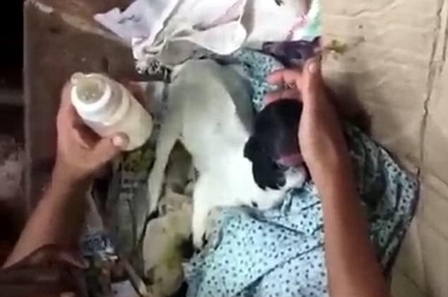Baby goat is born with no eyes and 'human-like' lips in India (Video)