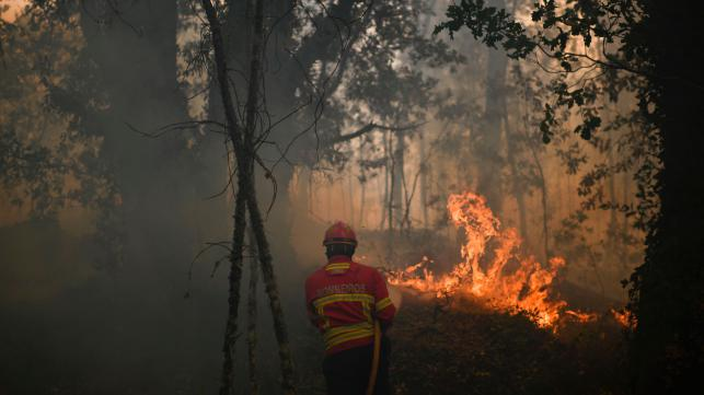 Death toll in Portugal forest fire hits 62