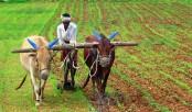Banks exceed agricultural loan disbursement target for FY17