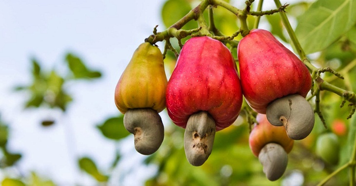 Vietnam plans to export 3 bln USD cashew nuts in 2017