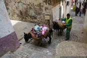 Donkeys at dawn: a rubbish job in the Algiers Kasbah