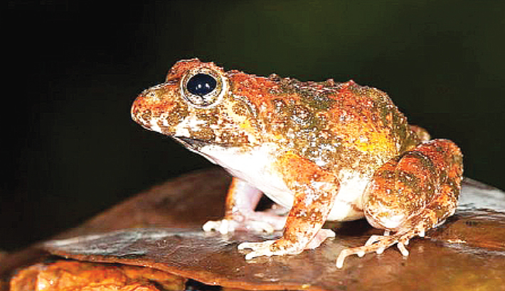 New frog species discovered in India