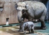 Moscow zoo shows off baby elephant!
