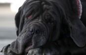 Meet the world's ugliest mutt