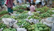 Markets in Rajshahi witness sufficient supply of mangoes