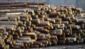 US imposes second round of tariffs on Canadian lumber