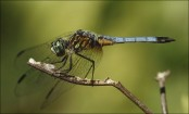 200-million-year-old giant dragonfly fossil found