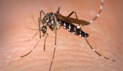 Sri Lanka deploys troops to tackle dengue
