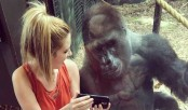 Gorilla and woman share special moment watching videos together