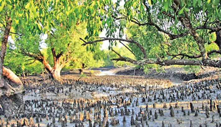 No more industries around Sundarbans