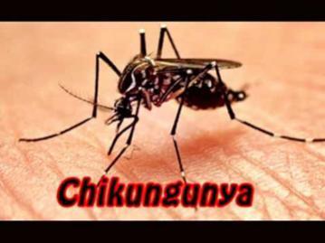 Hospitals to open help desks on chikungunya