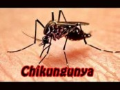 Hospitals to open help desks on chikungunya