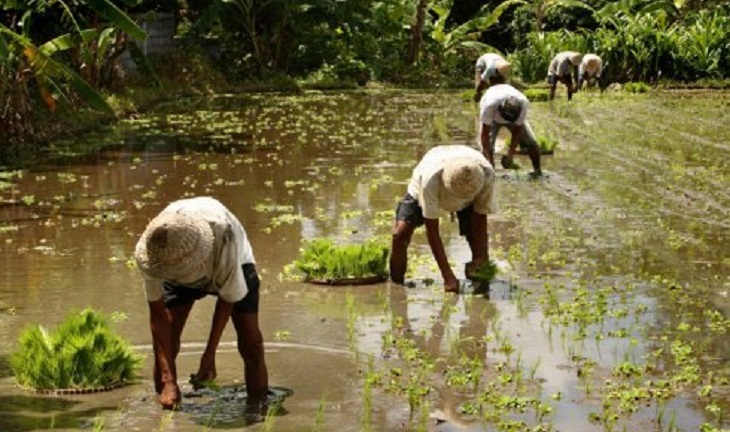 Bangladesh Rural Development Board disburses over Taka 12 crore loans