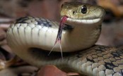 Nepali teen, banished for having her period, dies of snakebite