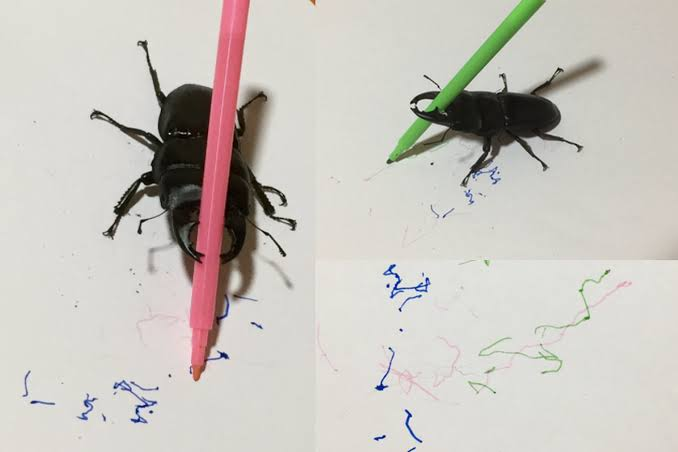 Meet 'Spike' the beetle who loves to draw!  (Video)