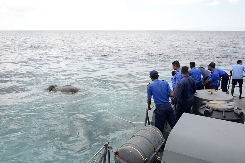 Sri Lankan navy rescues elephant washed out to sea (Video)