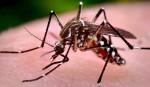 Dengue adds to Chikungunya panic