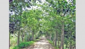 Tree plantation to save roads
