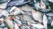 Bangladesh will be self-sufficient in fish next year, says Sayedul