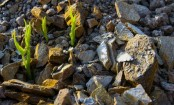 Early life on Earth began on land not sea: Scientists