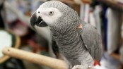 Woman convicted after pet parrot witnesses husband's murder (Video)