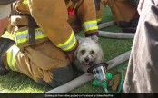 Firemen rescue pup from burning house, earn the internet's love (Video)