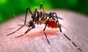 Stemming Chikungunya Outbreak