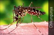 Fight Back Chikungunya with Proper Food