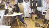 Now, a cat café in Myanmar