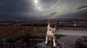 Pet pooch saves 2 girls struck by lightning