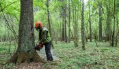 EU warns Poland to obey logging ban in ancient forest