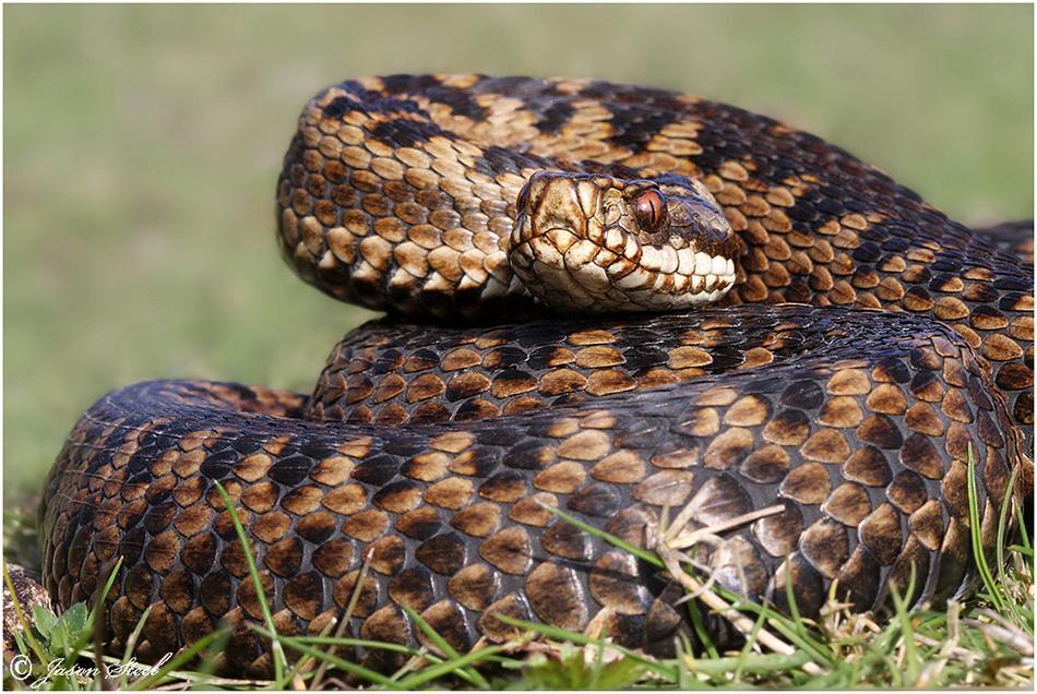 Scientists identify new snake species