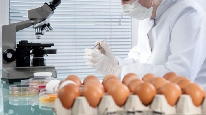 Eggs containing fipronil found in 15 EU countries and Hong Kong