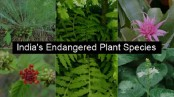 53 species of medicinal plants are under threat in India