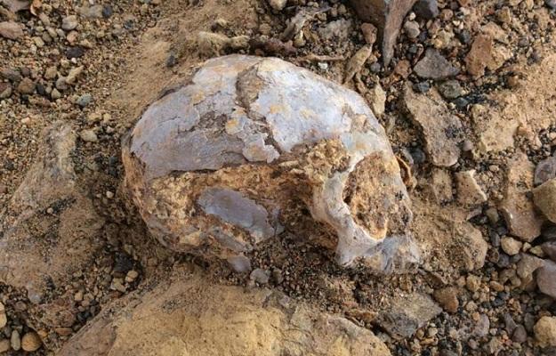 13-million-year old skull found in Kenya