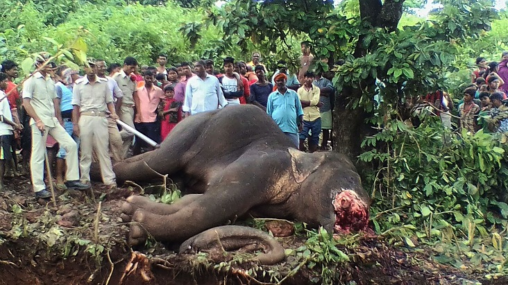 Hunter fells elephant that killed 15 in India