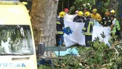 Falling tree kills 13 on Portuguese island of Madeira