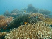 Japan launches study into suspected Chinese coral poaching