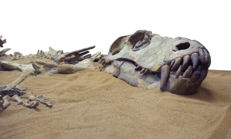 Fossilised dinosaur footprints found in China