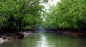 2 'bandits' held after Sundarbans 'gunfight'