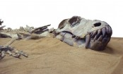 Fossilised dinosaur footprints found in China