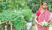 Sack Gardening: A Boon For Haor People