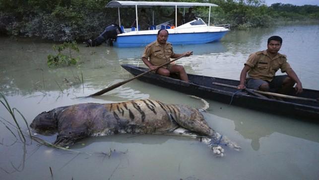 India wildlife reserve park devastated by monsoon floods