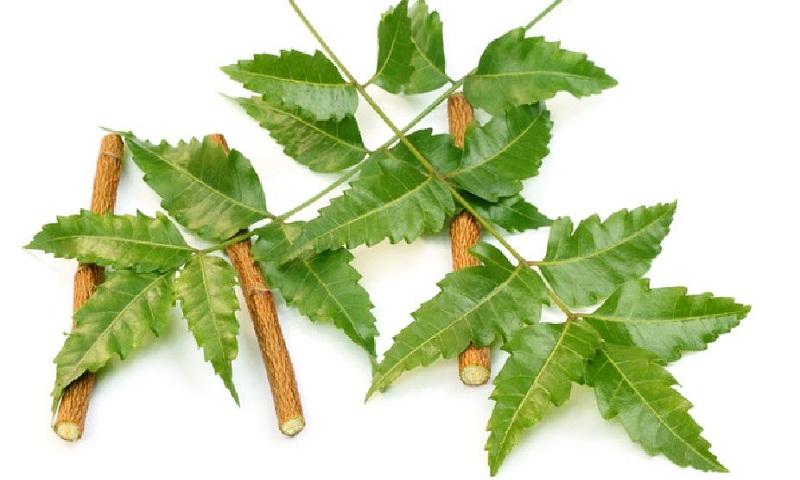 Beauty, health benefits of neem
