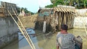 Under construction bridge collapsed in Kushtia