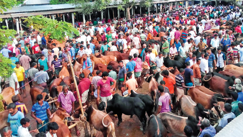 Sale gets momentum amid record supply of sacrificial animals