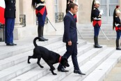 France finds 'Nemo' as Macron adopts first dog